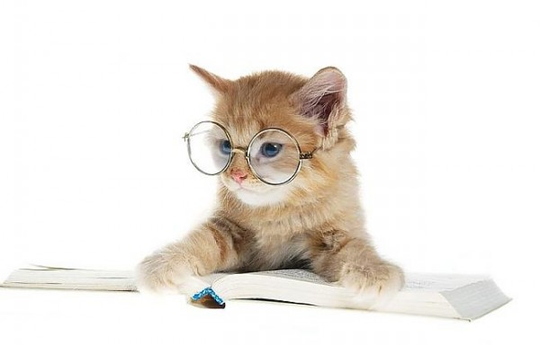 Glasses Cat